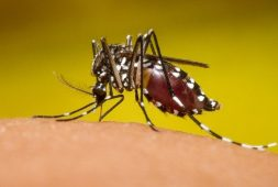 Ubican probable caso de dengue